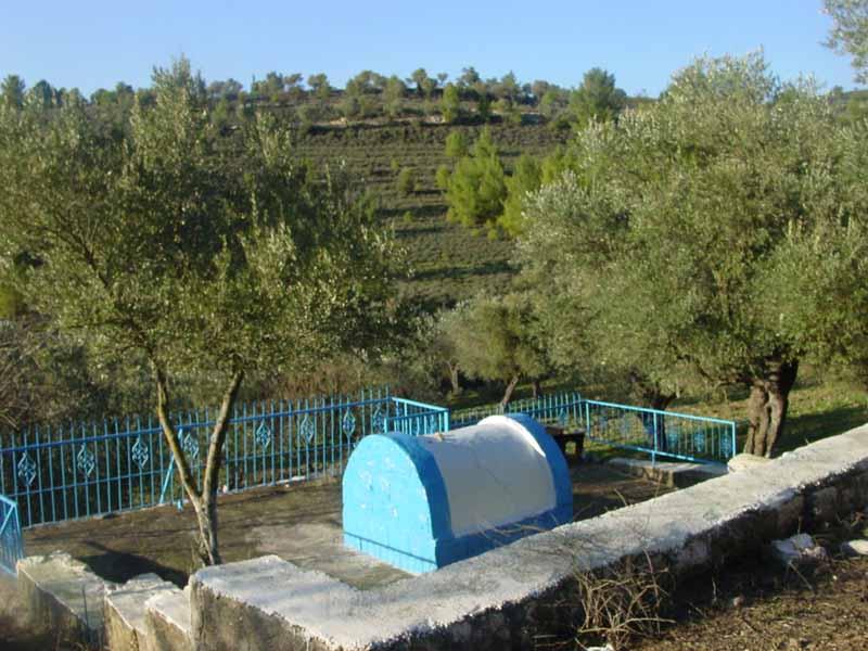 saragosi-view